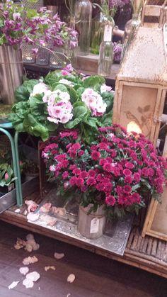 Finn Schjøll blomsterbutikk