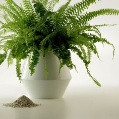 URNEO brings the ashes of your loved ones back to the cycle of life: The urn makes minerals in cremated remains accessible to a plant. Turning, Plants, Friends, Stones, Nature, Amigos, Wood Turning, Plant, Boyfriends