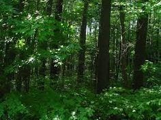 Image result for canadian forest