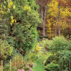 Garden Ideas North Carolina native plants that grow well under pines | garden ideas