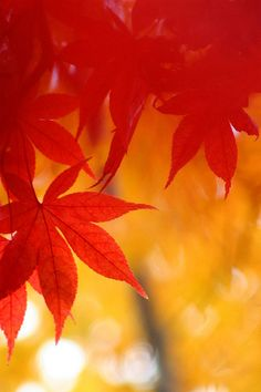 Grab some great red and yellow leaves outside...and just use those with various different glass things and candles and christmas lights.