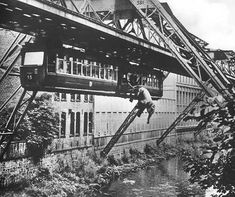 The Althoff Circus organized a publicity stunt by putting a baby elephant on the floating train at Alter Markt station. As the elephant started to bump around during the ride, she was pushed out the wagon and she fell into the river Wupper. The elephant, two journalists, and one passenger received minor injuries. After this jump, the elephant got the name of Tuffi, meaning 'waterdive' in italian.