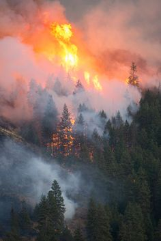 Wildland Firefighter, Fire Image, Environmental Pollution, Burning Bridges, Wild Fire, Firemen, Firefighters, Natural Disasters, Amazing Nature