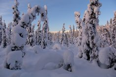 Snow-covered boreal forest from Fairbanks, Alaska. Finally starting to get outside and take some photos again! https://lwpetersen.com/photo-blog/welcom... - Lee Petersen - Google+