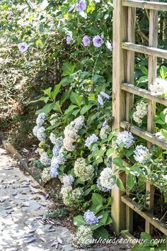 These tips for figuring out why your hydrangea isn't blooming are awesome. Find out what you need to do to get beautiful perennial Hydrangea flowers in your garden landscaping. Hydrangea Shade, Types Of Hydrangeas, Smooth Hydrangea, Climbing Hydrangea, Hydrangea Not Blooming, Hydrangea Garden, Shade Flowers, Hydrangea Flower, Shade Plants