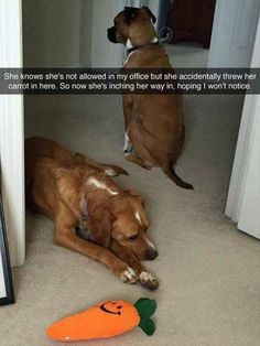 funny-animals-16