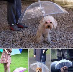 Guinzaglio con ombrello incorporato