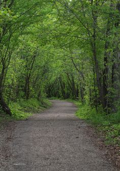 Edmonton's beautiful river valley is filled with trails for walking, hiking, biking, snowshoeing, and cross-country skiing. Great Places, Places To See, Beautiful Places, Walking In Nature, Walking Paths, Train Tour, Western Canada, Visit Canada, Photo Tree