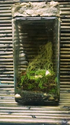 pine forest moss terrarium with local nature from by paperanji
