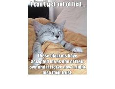 You Can Haz Memes? 31 Hilarious Cat Memes From Around The Internet (Slide #60) - Pawsome