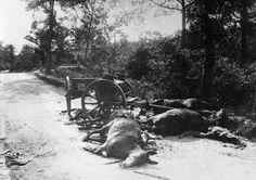 Fotos de la Primera Guerra Mundial: 99 aniversario del verano de su comienzo (IMÁGENES).1916. Caballos disparos en la batalla de Hill, cerca de Reims.