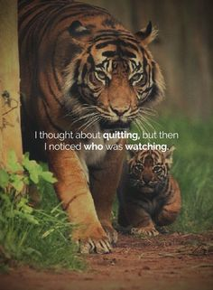 A Conscious Rethink has collated some of the very best quotes into a number of different articles. From Winnie-the-Pooh quotes to inner peace quotes and more, you'll find loads of inspiration here. Tiger Quotes, Lion Quotes, Wolf Quotes, Heart Quotes, Motivational Quotes For Success, Meaningful Quotes, Inspirational Quotes, Quotes Motivation, Motivation Success