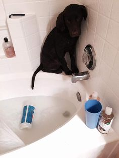 Swimming? Yes. Bath time? No. - Imgur