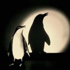 Penguin Eclipse