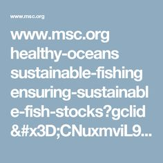 www.msc.org healthy-oceans sustainable-fishing ensuring-sustainable-fish-stocks?gclid=CNuxmviL9NICFYYaGwodspUEQw