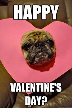 1000+ images about pugs and more! on Pinterest | Funny ...