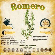 Eco Garden, Indoor Garden, Growing Onions, Building Raised Garden Beds, Spring Starts, Make A Person, Seed Starting, Compost, Vegetable Garden