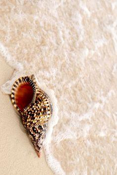 Sea Shell and Ocean Wave by Elena Elisseeva Sea And Ocean, Ocean Beach, Ocean Waves, Shell Beach, Nude Beach, I Love The Beach, Am Meer, Sea Creatures, Under The Sea