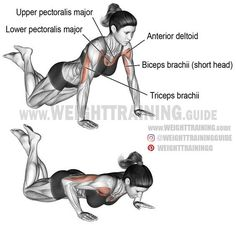 Knee push-up. A compound exercise for beginners. Target muscle: Lower Pectoralis Major. Synergistic muscles: Upper Pectoralis Major, Anterior Deltoid, and Triceps Brachii. Dynamic stabilizer: Biceps Brachii (short head only).