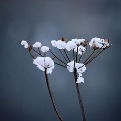 Flora ved Brahesborg Gods  #visitfyn #fyn #nature #visitdenmark #naturelovers #natur #denmark #danmark #dänemark #landscape #nofilter #assens #mitassens #vildmedfyn #fynerfin #assensnatur #vielskernaturen #visitassens #forrest #instapic #picoftheday #november #snow #flora #sne