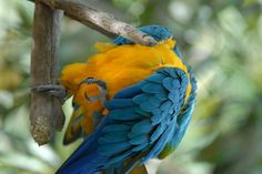 Celebrate the wonders of nature at Audubon Institute in New Orleans. www.AudubonInstitute.org