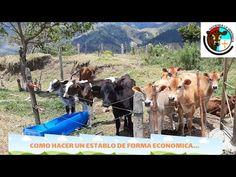COMO HACER UN ESTABLO DE FORMA ECONOMICA Y PRACTICA - YouTube