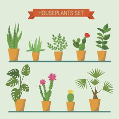 Vector collection of houseplants and flowers in pots. Vector flat illustration vector art illustration