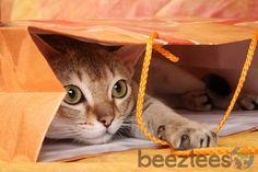 Cadeaus, Cadeaus, Cadeaus! Lovely cat in a colourfull paper bag. #Beeztees #Happymoments #Congratulations #Createhappymoments