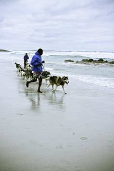 Mush it Up Husky sledding in Cape Town - Greenhairmermaid Green Hair, Sled, Cape Town, Animals Beautiful, South Africa, Husky, Mermaid, Creatures, African
