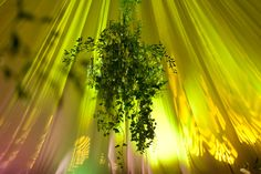 Wild Green Garden Wedding Reception in 19th century Rozalin Palace - combination of classic elegance with twist of wild green. Poland, by artsize.pl