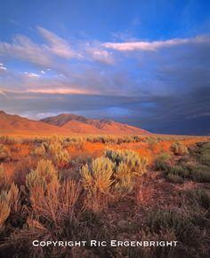 Sunset light colors the sagebrush and the hillsides in the Nevada desert.