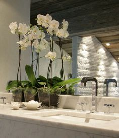 white orchids for the bathroom - Fiona Barratt Interiors