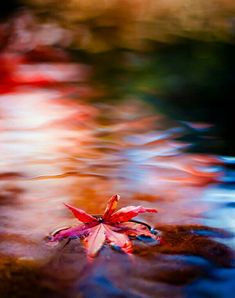 Japanese maple leaf--beautiful abstract and colors; Amazing Photography, Nature Photography, Photography Career, Photography Lessons, Combattre Le Stress, Cool Photos, Beautiful Pictures, Such Und Find, Bokeh