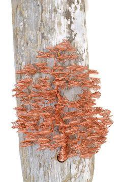 Rustic Sculpture / Wall Sculpture / Driftwood Hanging /