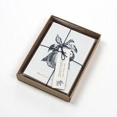 Edible Botany - Set of Eight Botanical Cards - Alfies Studio