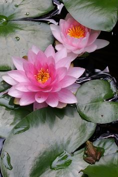 by Putneypics Beauty