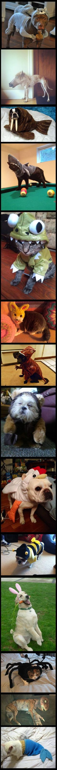 LOL - Animals dressed as other animals - www.funny-pictures-blog.com