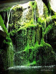 Moss in rock shower Aquarium Aquascape, Aquascaping, Planted Aquarium, Aquarium Terrarium, Nature Aquarium, Aquarium Fish, Vivarium, Indoor Waterfall, Aquarium Design