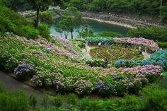 Hydrangea garden in Katahara-onsen (Gamagori-shi, JAPAN) Landscape Design, Garden Design, Peonies And Hydrangeas, Hillside Garden, Hydrangea Garden, Around The World In 80 Days, Blooming Flowers, Summer Garden, Japan Travel