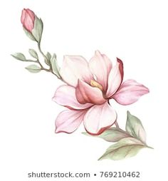 Flower Drawing Discover Image Blooming Magnolia Branch Watercolor Illustration Stock Illustration 769210462 Similar Images Stock Photos & Vectors of watercolor illustration flowers in simple background - 165422009 Flor Magnolia, Magnolia Branch, Magnolia Flower, Illustration Blume, Watercolor Illustration, Watercolor Flowers, Watercolor Paintings, Watercolor Lotus, Floral Drawing