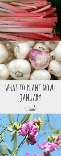 You don't have to wait for spring to grow new plants, some are perfectly happy to get going in January. Check out these top picks for what to plant in January.