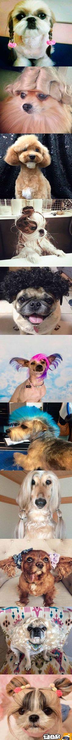 cachorros-estilosos-1