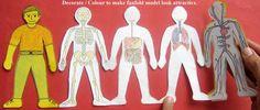 Dépliant du corps humain (en couleurs ou noir et blanc).  Folded human being…