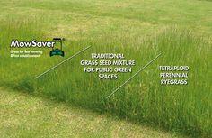 Hogyan mulcsozzak? - Pázsit.hu Grass Seed, Parcs, Passion, Gardens, Lawn, Public Garden, Landscape Planner