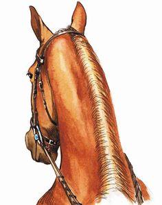 Horse-Training for Flexibility, Part 1