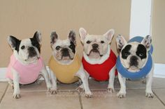 Our friends at NuttButt Bakery sent us these nice t-shirts!  www.nuttbuttbakery.com  #frenchbulldogs