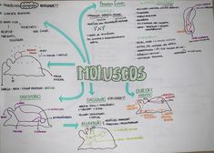 #moluscos #zoologia #biologia #resumo