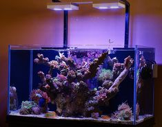 Tips and Tricks on Creating Amazing Aquascapes - Page 46 - Reef Central Online Community Reef Tanks, Fish Tanks, Saltwater Aquarium, Terrariums, Getting Old, Fresh Water, Projects To Try, Community, Future