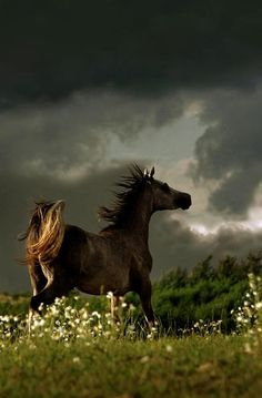 Horse in stormy weather...
