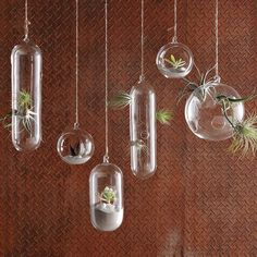 These floating terrariums have a bubbly quality that dresses up any room of the house!